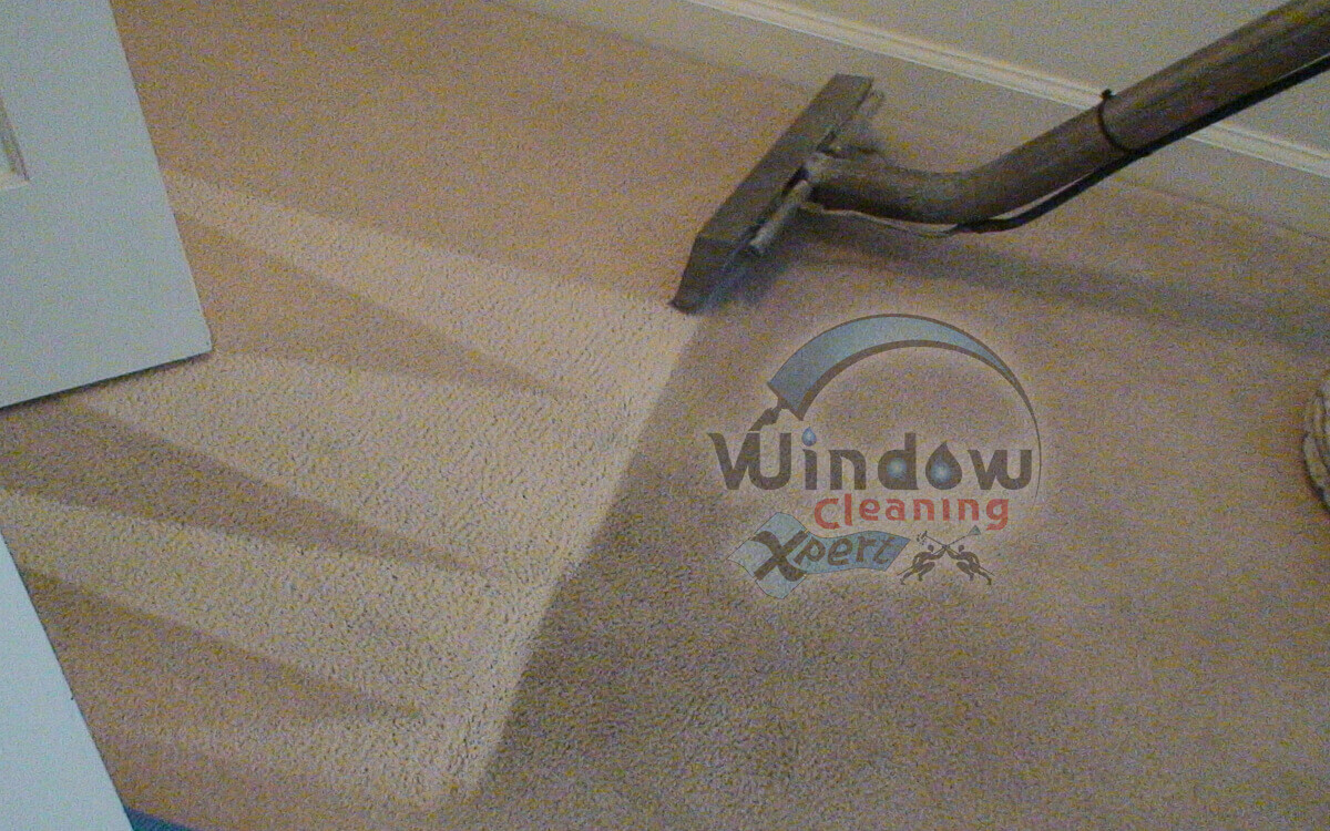 carpet clean steam cleaning